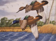 Oil PaintingOriginalBlue Winged Teal Ducks by KickingBear on Etsy, $450.00