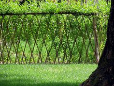 Green-Willow fence -Imagine a garden enclosed in a living fence.
