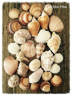 Sea Shells Photo Instant Download Wall Art Wall Decor by MOIRAPINA