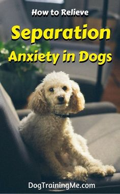Separation anxiety in dogs isn't fun for you or your pup! Learn 5 ways to ease dog separation anxiety and the #1 root cause of your problem by reading our article! Help your dog out by making them more comfortable when you are away from them. #separationanxietyindogs