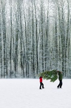 Stunning Picz: Bringing Home The Tree.