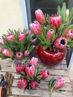 Proteas bloomin gorgeous Art For Sale, Succulents, Bloom, Earth, Studio, Flowers, Plants, Red, Florals