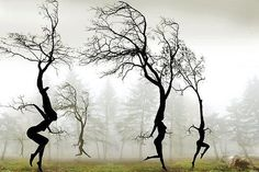 a strong wind blew and the trees were seen dancing.....