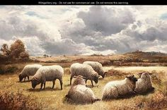 sheep grazing - Google Search