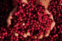 Cranberry Brie Crêpes