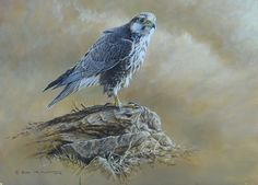 Donated Lugger Falcon Painting to Project Lugger. Birds of Prey paintings by Alan M Hunt British Wildlife, Wildlife Art, All Birds, Birds Of Prey, Raptors, Bird Art, Big Cats, Art Blog, National Parks