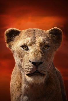The Lion King poster, t-shirt, mouse pad Lion King Poster, Lion King 1, Lion King Movie, Disney Lion King, Lion Wallpaper, Disney Wallpaper, Disney Art, Disney Castle Drawing, Le Roi Lion Film
