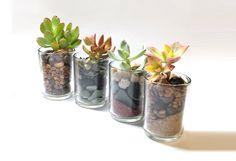 Mini Succulents in Votives or Shot Glasses (Set of 4)