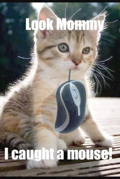 Caught a mouse? #funnycats #catmemes #funnymemes