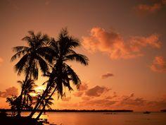 A Warm Spot Under A Coconut Tree