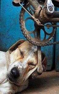 Lazy boy!