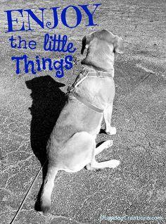 Take Time to Enjoy the Little Things - Sophie #RescueDog #HoundMix #SeniorDog ©LapdogCreations