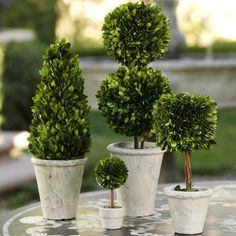 """Boxwood Potted Ball Topiary - Real Preserved Boxwood Topiary - Small Dimensions: 4"""" x 5.5"""" - Medium Dimensions: 4.75"""" x 6.75"""" - Large Dimensions: 5.25"""" x 9.75"""" - Imported"""