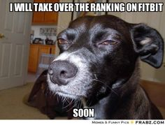 "Suspicious Dog - Funny memes that ""GET IT"" and want you to too. Get the latest funniest memes and keep up what is going on in the meme-o-sphere. Funny Animal Memes, Dog Memes, Funny Dogs, Funny Animals, Cute Animals, Funny Memes, Dog Humor, Silly Dogs, Hilarious Sayings"