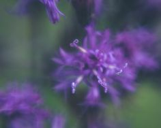 Dreamy Purple Flowers Photograph Nature Photography Fine Art Photo Home Wall Art Floral Garden Outdoors Green Abstract by ShutterTreePhotos on Etsy