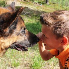 Best friends #bestevenner #bestfriends #friends #schæferhund #schæfer #dog #sheep_dog #german_shepherd #instahund #vennskap #friendship #cut #beautiful #kos #sweet #lifeisgood German Shepherd Dogs, Kos, My Photos, Instagram Posts, People, Animals, Beautiful, Pet Dogs, Animales