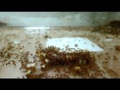 How To Get Rid of Ants Naturally (3 Ways To Kills Ants) - YouTube