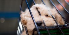 More Than 200 Dogs Saved From Canadian Puppy Mill