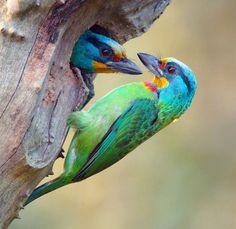 Beautiful coloured birds