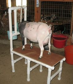 PVC Milking Stand