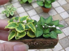 miniature hosta made by artistan Carolyn Mohler Kraft