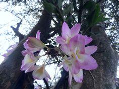 orquideas!
