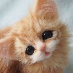 Cute Needle felted wool animals cat kitten (Via @rikka.ik)ca