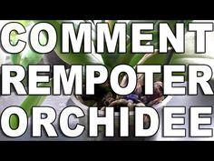 Comment rempoter son Orchidée - YouTube Comment Planter, Autumn Garden, Orchids, Passion, Art Floral, Gardening, Nature, Aloe Vera, Youtube