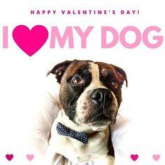 Be my Valentine  #pes #dog #cane #hund #psik #psizivot #psialaska #doglover #doglove #valentin #valentine #love #bemyvalentine #slovakdog #czechdog #laska #chlpac #chlpatalaska #panpes #pejsek #mojpes #mujpes #dogbowtie #psimotylek #stylovypes motyliky pre psíky nájdete na shop.pesbruno.sk by pesbrunosk