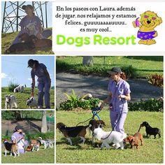 """Nosotros, los de raza pequeña, tenemos en Dogs Resort unos paseos especiales con Laura. Caminamos, descansamos y disfrutamos de la naturaleza. Son muy """"nice""""..."""