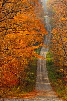 View top-quality stock photos of Maple Trees Overhanging Burnetts Side Road Sheguiandah Manitoulin Island Ontario Canada. Find premium, high-resolution stock photography at Getty Images. Side Road, Back Road, Manitoulin Island, Autumn Scenery, Fall Pictures, Mother Nature, Paths, Country Roads, Beautiful