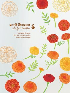 hand drawn marigold flowers. EPS and 23 high quality by mellenes