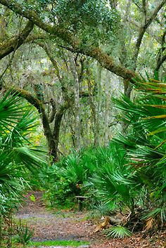 Enchanted Forest Sanctury Trail, Titusville