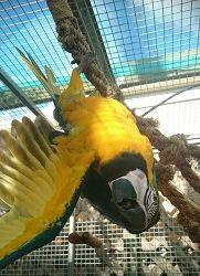 Parrot Climbing Net - Large Short