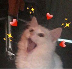 Cute Cat Memes, Cute Animal Memes, Cute Love Memes, Cute Funny Animals, Funny Cats, Funny Memes, Funny Cat Faces, Funny Cat Photos, Funny Animal Pictures