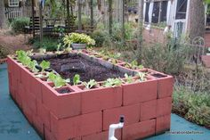 keyhole garden.  raised bed with composting basket in center.