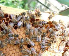 #Apicoltura urbana a #Melbourne ! Altro che Orti Urbani, alcuni sono riusciti ad avere un vero e proprio alveare, producendo #miele e derivati! - #wisesociety
