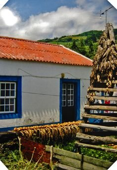 azores - flores - house and corn Can't you imagine a simple life living off the land. Farms and animals, sunset chama-rita's and fado playing seductively in the background. And happiness.oh the happiness is everywhere! Portugal, Ellis Island, Living Off The Land, The Beautiful Country, Archipelago, Beautiful Islands, Homeland, Portuguese, Air Force