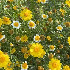 "Liz Langley Studio on Instagram: ""It really is daisy season 🌼🌼🌼 Happy weekend! * * * #flowersofinstagram #floralinspiration #floralhunters #daisies🌼 #myfloralhome"" Paradise City, Happy Weekend, Daisies, Seasons, Studio, Floral, Flowers, Plants, Inspiration"