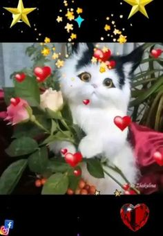 Beautiful Nature Wallpaper, Beautiful Flowers, Fun Songs, Cute Gif, Animals And Pets, Good Morning, Happy Birthday, Love You, Animation