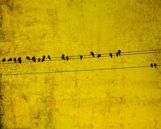 Birds on a Yellow Wire on Etsy