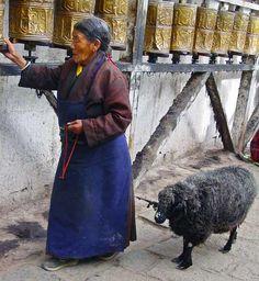Tibetan lady with sheep on the Potang Shakor (Potala Kora), Lhasa, Tibet. © yowangdu.com.