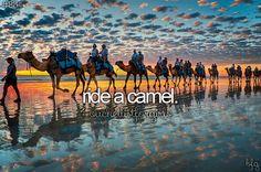 Bucket List - Ride a camel.