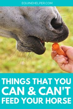 There are some human foods that are totally safe for your horse, and others that they should definitely avoid! In this guide, we cover everything you should know about what your horse can and can't safely eat.