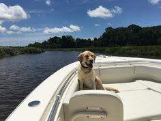 2016 Cobia 296 #knottydawg #296 #cobia #cobiaboats #cobia296 #lab #lapdog #leadingtheway #lovethisdog #dog #sky #sit