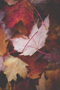 Perfect leaves #autumn