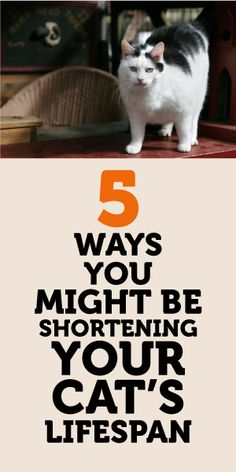 5 Ways You Might Be Shortening Your Cat's Lifespan