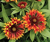 25 flowering plants that can withstand full sun in a southern climate