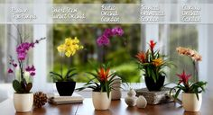 History and Meaning of Orchids | ProFlowers Blog