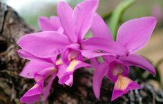 no-brasil-encontra-se-a-maior-riqueza-de-especie-de-orquideas (2481×1595)